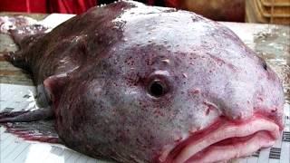 видео Кто обитает на дне океана?