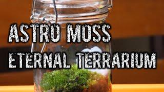 How to build a basic Closed Terrarium.