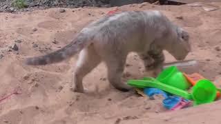 кошки Гали и Миши (Жлобин)