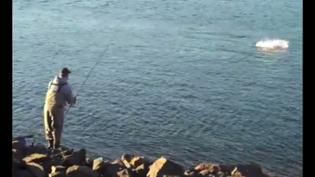Cape cod canal striped bass fishing splashzilla youtube for Cape cod canal fishing report