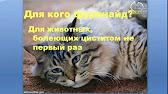 Аптека 238 Краснодар - YouTube