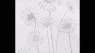 Drawing lesson How to draw a realistic daisy