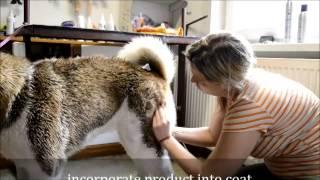American Akita grooming