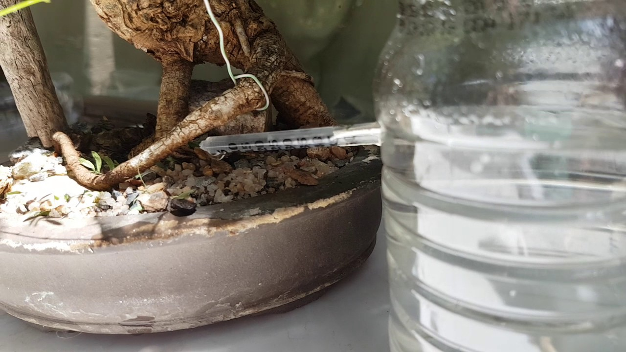 how to create an automatic bonsai watering system - youtube