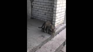 Кошачье порно