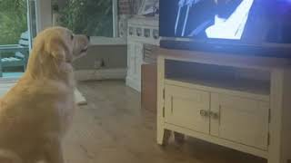 Dog Singing along to Pavarotti  BestDogsLifeUK  Nessun Dorma  Funny Dog Pet Video  Opera Dog