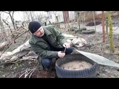 Как укрыть на зиму актинидию