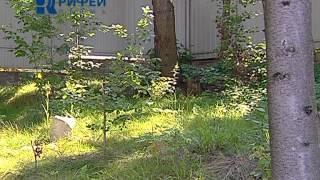 Зелённый участок  Лесной уголок в саду