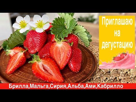 Обзор и дегустация ягоды клубники сортов:Брилла,Альба,Мальга,Сирия,Кабрилло,Ами.