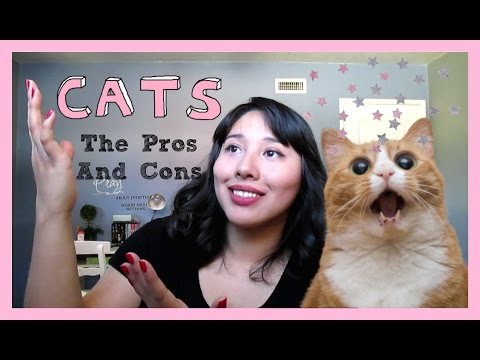 Cats, The Pros and Cons of Owning Them