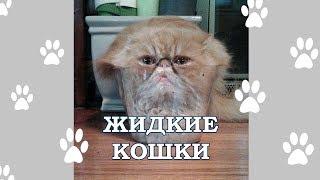 Почему кошки это жидкость