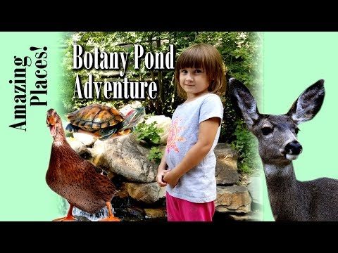 Botany Pond and Garden ADVENTURE!