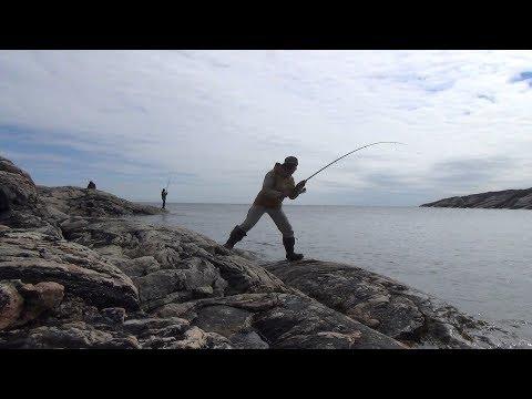 Карелия. За семью озёрами да семью волоками, море Белое трескою полнится. 2 часть