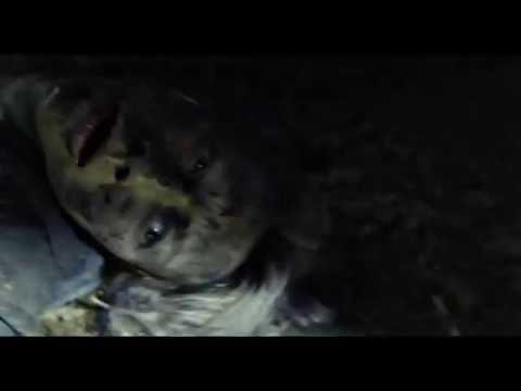 Trailer de Blair Witch en HD