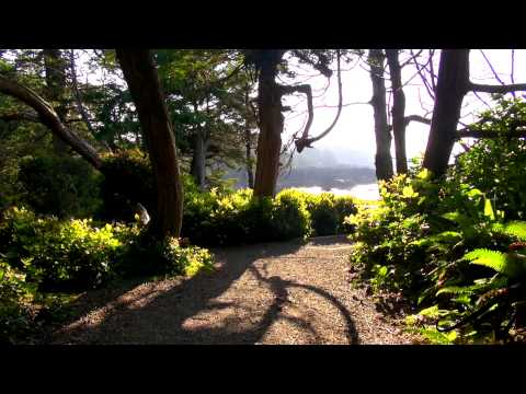 Wild Pacific Trail near Ucluelet, BC -  YouTube
