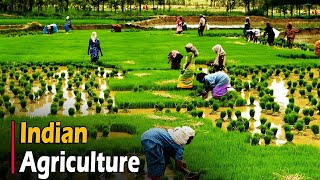 AGRICULTURE IN INDIA - Documentary