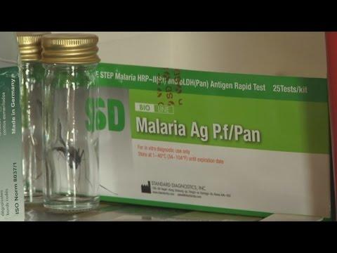 Первая вакцина от малярии не решит проблемы на 100% (новости)