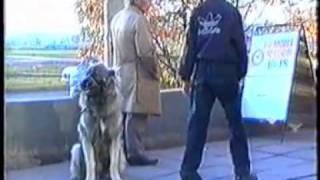 Воспитание щенка. Приучение к порядку на улице.