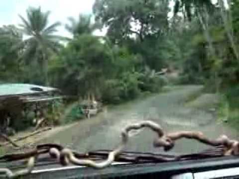 Trans-Flores Highway between Bajawa and Ruteng @ Flores, NTT