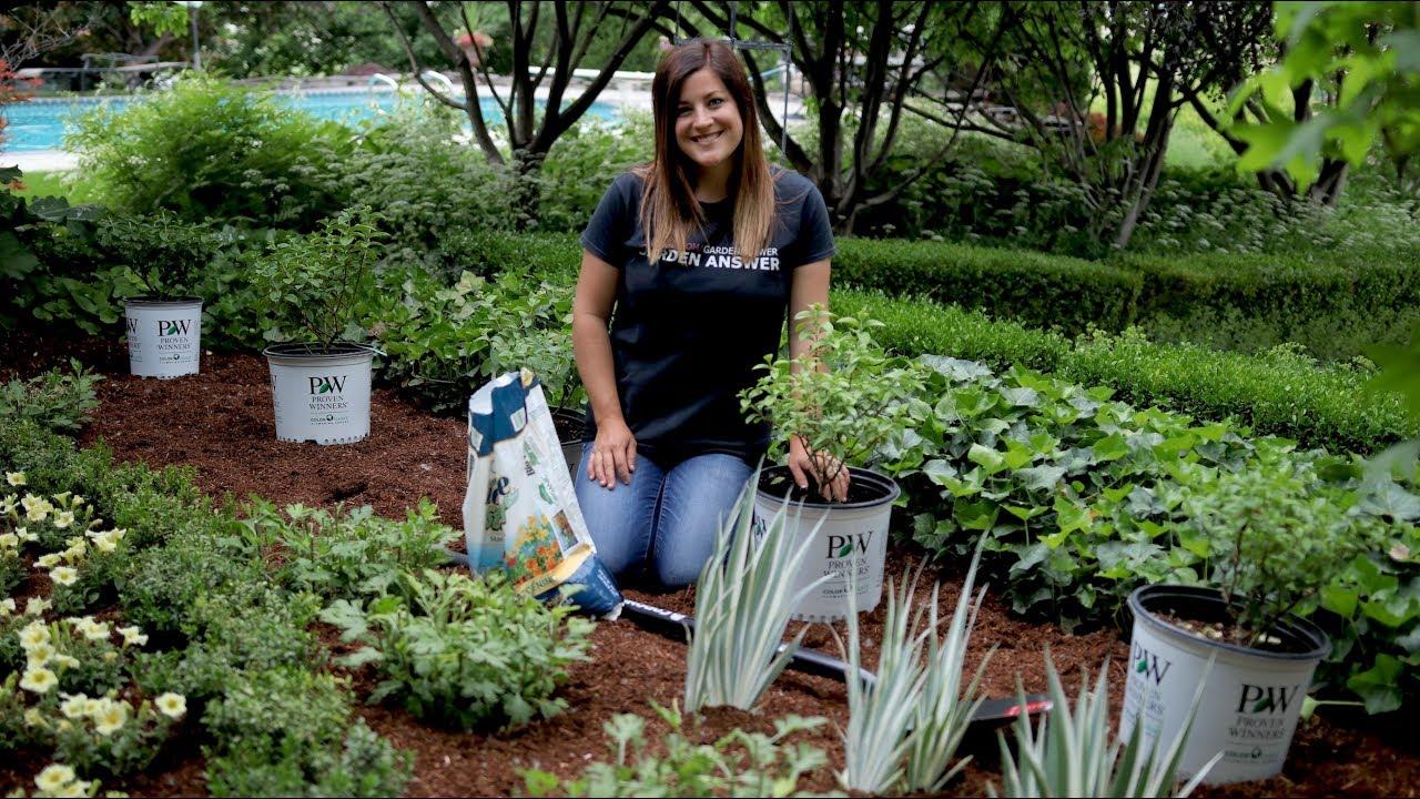 Planting A Hedge Of Bobo Hydrangeas Garden Answer Youtube