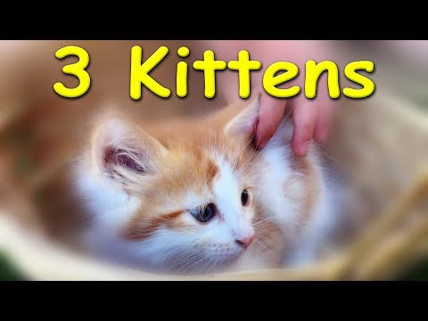The 3 Cutest, Cuddliest, Snuggliest Kitties at Momma O's  \\  Best Summertime Kitten Fun Ever!!