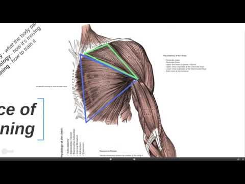The Science of Chest Training
