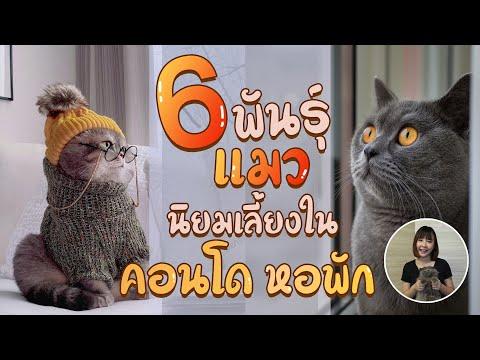 EP21 : 6 พันธุ์แมวนิยมเลี้ยงใน คอนโด หอพัก จะมีแมวพันธุ์ไหนบ้างนะ ?