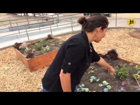 Kitchen Garden at Los Arboles Middle School: gardening teacher Anna Munoz speaks