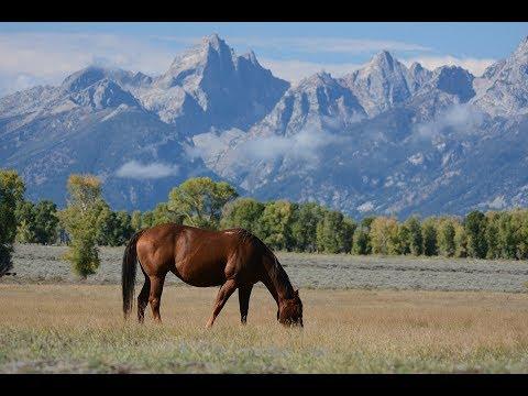 10 Bedroom All Inclusive Horse Ranch Resort in Málaga 12 000 000€
