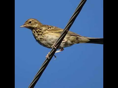Почему напряжение не убивает птиц, сидящих на линиях электропередач?