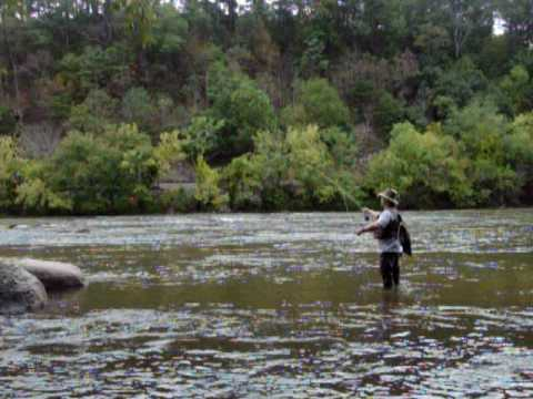 Fly fishing the french broad river youtube for French broad river fishing
