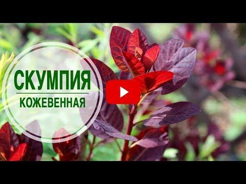 Выращивание клубники в теплице инструкция и советы от