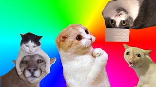 #2 Crazy Cats Funny Animals Awesome Pets