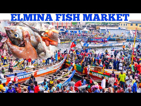 A TYPICAL FISH MARKET IN WEST AFRICA | Elmina Fish Market 🇬🇭