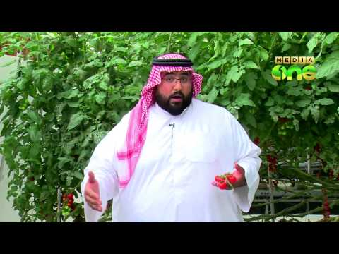 Peninsula Farms in Bahrain - Weekend Arbia (Epi114 Part3)