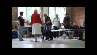 выставка в Тольятти 15 06 14 г   ризеншнауцеры