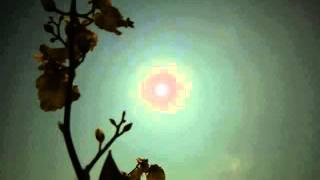 王嶽 翻唱 - 《 數羊 》 ~ 原唱:葉樹茵