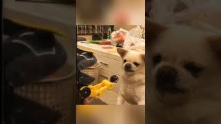 funny🤣 dogs videos || funny moments || funny fails|| epic fails||