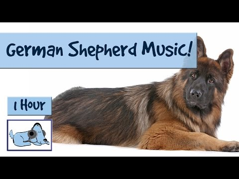Music for German Shepherds! German Shepherd Soothing Music for Anxiety Prevention 🐶 #GERMANSHEP02