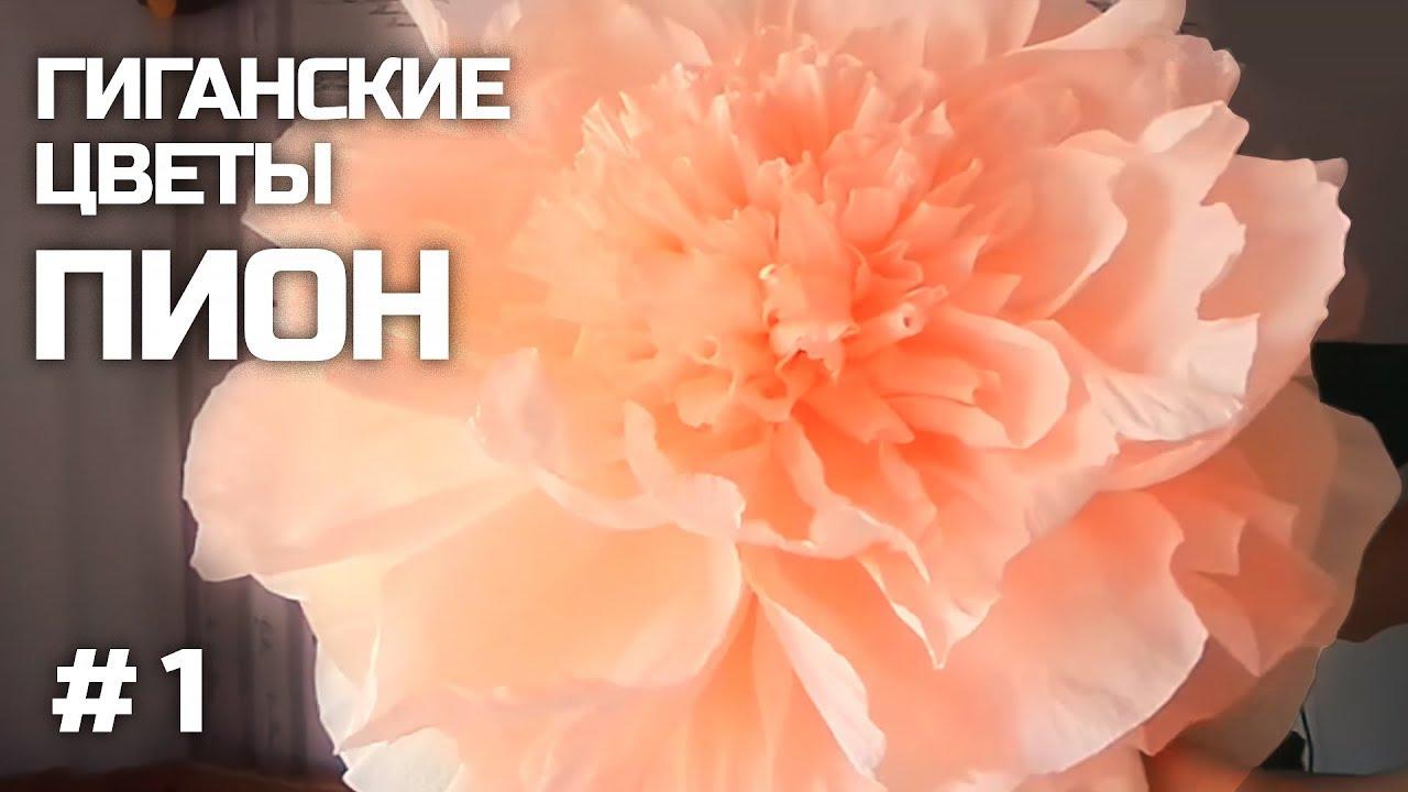 Высадка подвоя для розы(шиповника) - YouTube