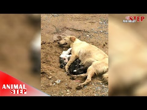 Homeless Dog Gives Birth at Construction Field Getting Rescued