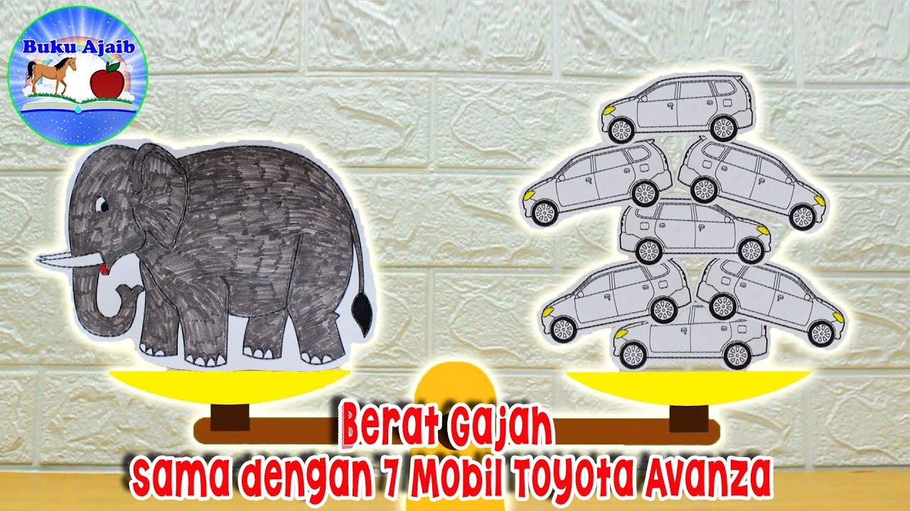 Berat Gajah sama dengan 7 Mobil Avanza | Info dan Fakta Menarik | Buku Ajaib