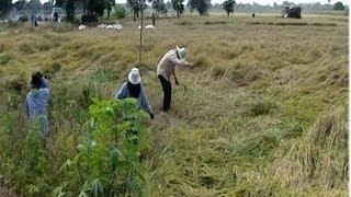 منظمة الأغذية والزراعة تحذر من خطر المجاعة بحلول منتصف القرن الحالي