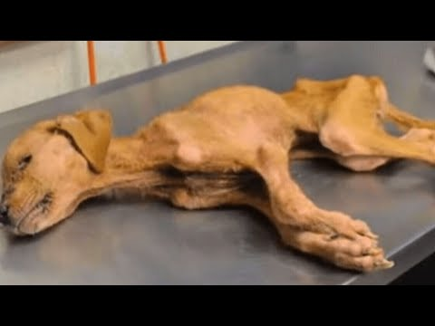 Halb verhungerter Hund trifft auf Autisten, dann passiert ein Wunder...