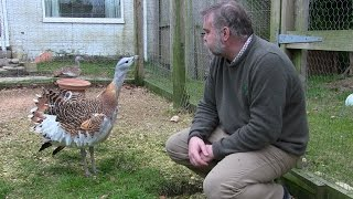 "Meeting the ""Great Bustard"""