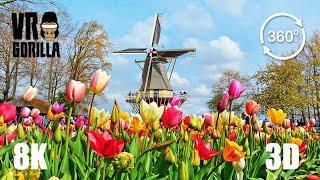 This is Holland VR: Keukenhof Flower 'Garden of Europe' - 8K 360 3D Video