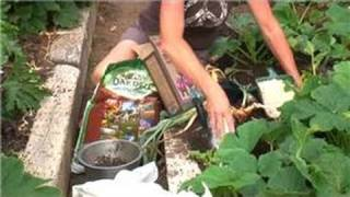 Vegetable Gardening : How to Grow Large Sweet Onions