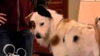 Собака точка ком   1 сезон, 11  3серия
