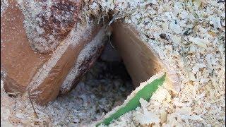 Что построили песчанки. Жизнь наших животных в частном доме.