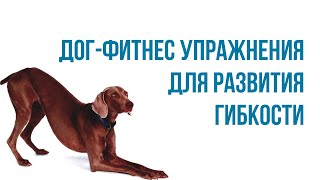 Урок 4. Упражнения для развития гибкости собаки. Домашний Дог-фитнес